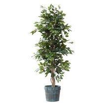 Arbres et plantes vertes